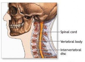 cervical_spine_anatomy