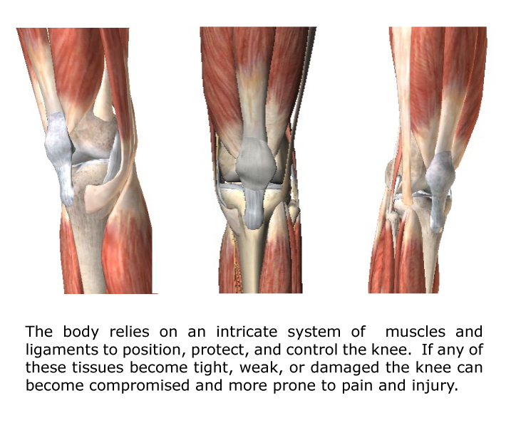knee pain muscles
