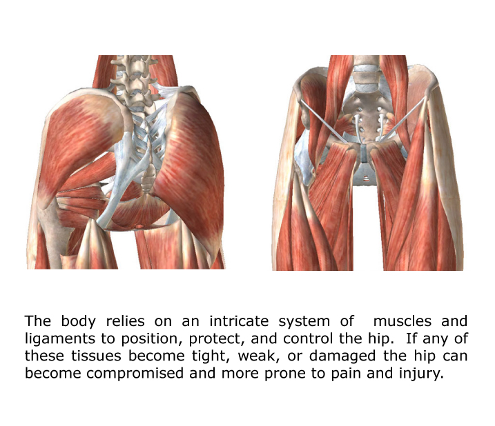 hip pain muscles